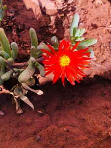 feune et fleurs